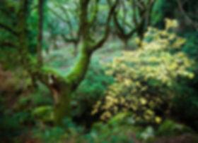 verde alajar.jpg