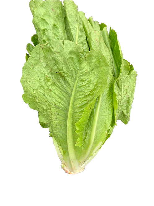Head of Romaine Lettuce