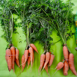 Farm Fresh Carrots from Cottage/Lopez Farms