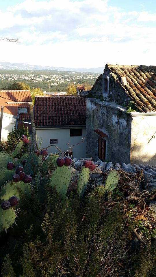 kastav kaktus.jpg
