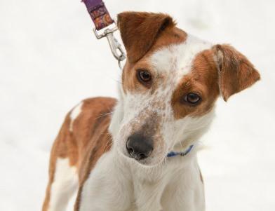 FCSO Regional Dog Shelter Needs Volunteers