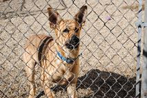 Regional Kennel Highlighted as 'Successful Grant Project'