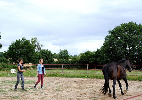Communication en liberté avec le cheval