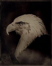 EAGLE02F.jpg