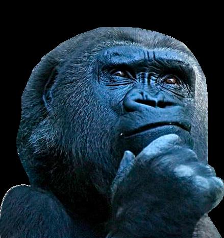 Macaco-pensando-5.png