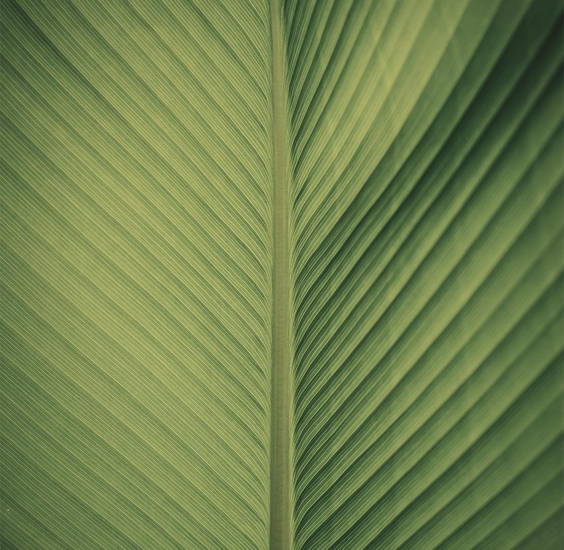 Leaf meditation