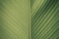 Jade Seed Wellness