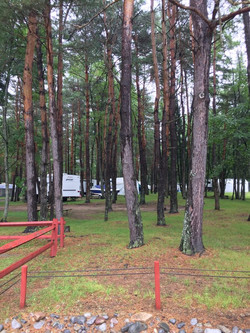 Heavily Wooded Campground