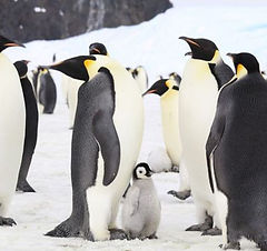 une-image-pingouin-1.jpg