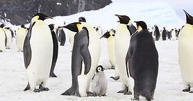 une-image-pingouin.jpg