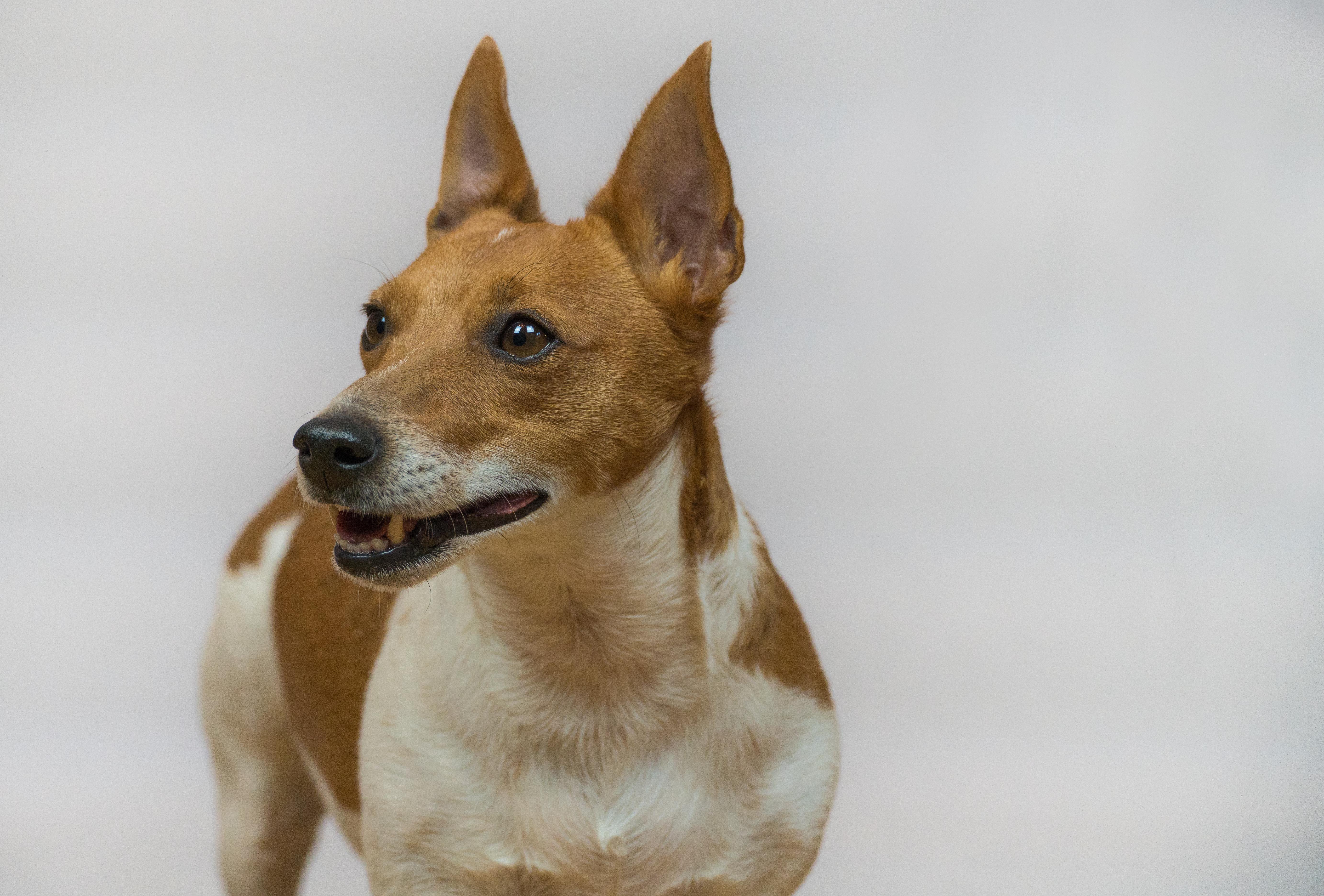 Fotografia de estudio mascotas
