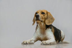 Fotografia estudio mascotas Madrid