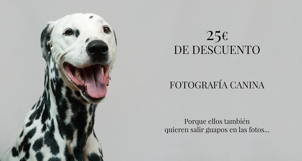 Fotografia de mascotas en estudio madrid