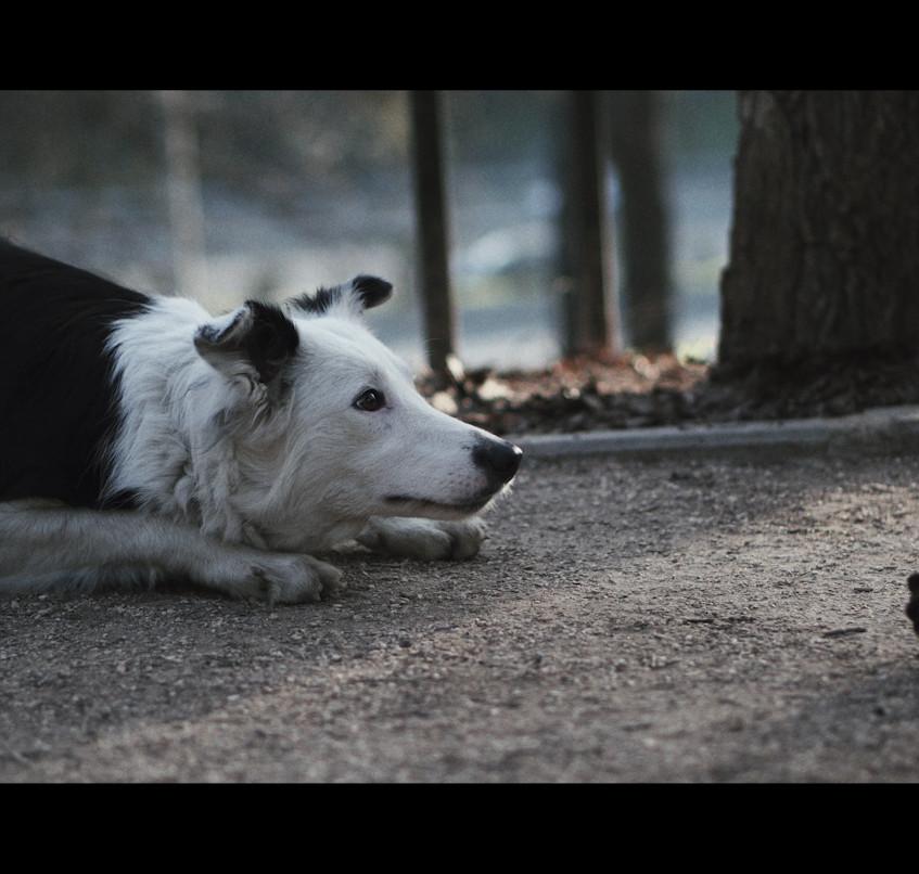 Dogs Short Film
