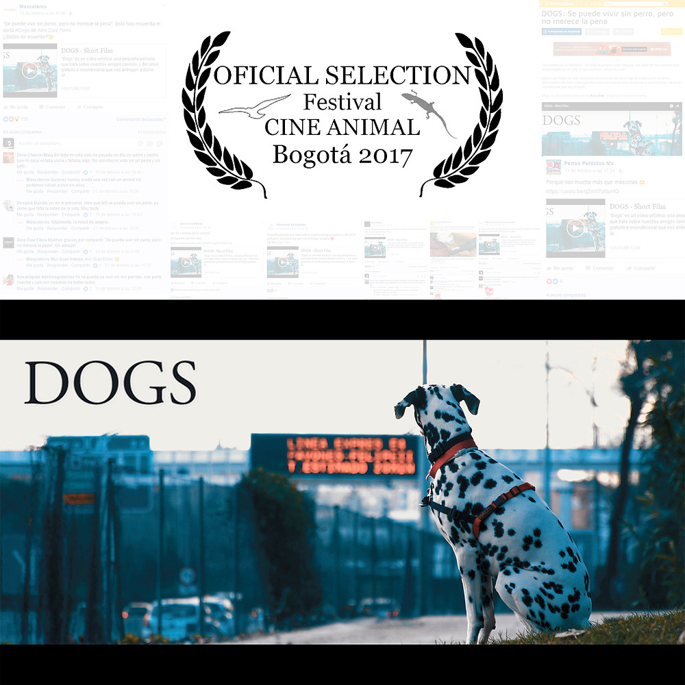 Dogs cortometraje Alex Diaz Films no al maltrato animal