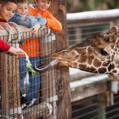 Große Exkursion in den Zoo Osnabrück