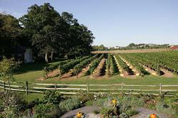 view of vineyard in spring