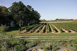 vineyard view in spring