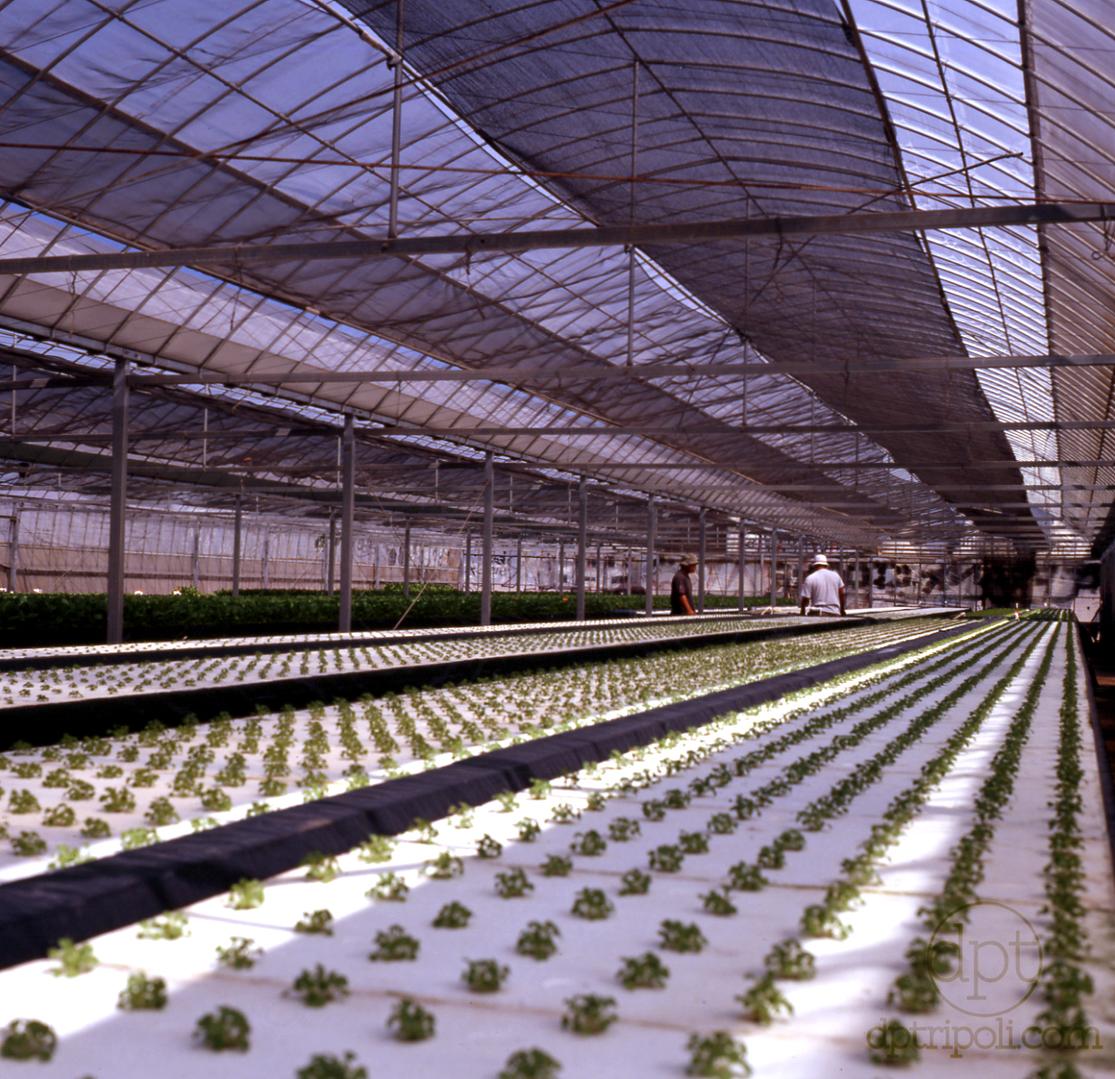 Kangi's Greenhouse