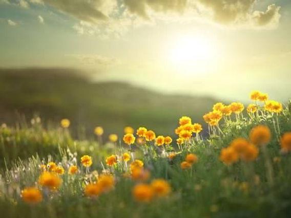 fleurs_et_couché_soleil.jpg