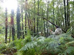 Purification dans la forêt