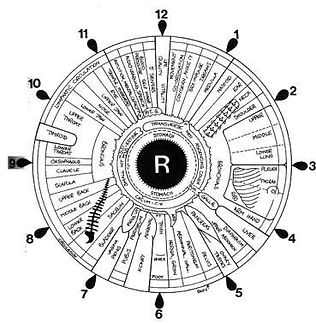 """Iridology is a science because the data collected must be observed, understood, cataloged, matched to a value, and given meaning.  The latter must be reproducible and verifiable by other Iridologists, and other people studying the iris.""  Dr. Daniele LoRi"