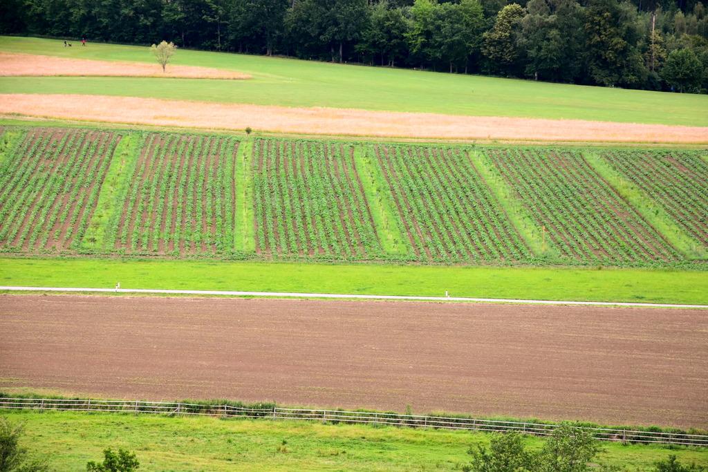 Agroforst Anlage in der Steiermark