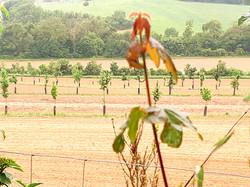 Agroforst Landscape