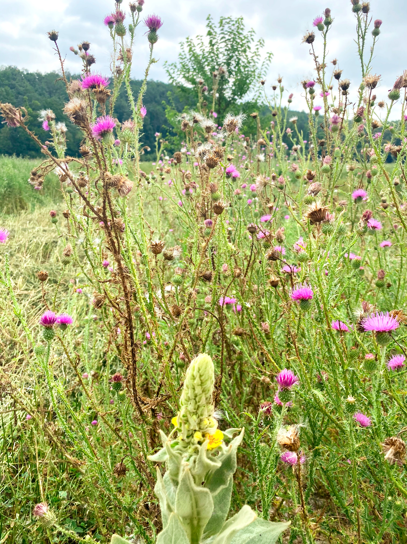 Biodiversität durch Agroforstsysteme