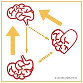 Meine Bauchgefühe Drei Gehirne