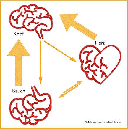 Die Drei Gehirne Meine Bauchgefühle