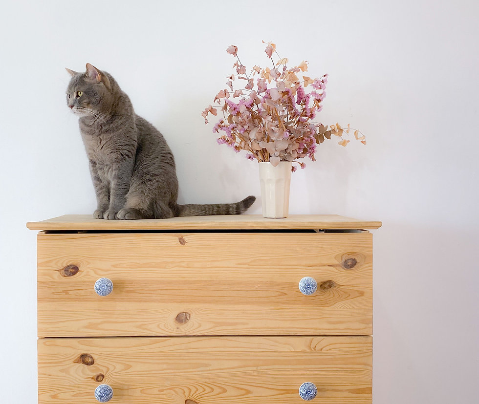 Cat on dresser