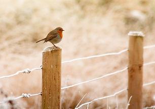 bird fence-843578_1920.jpg