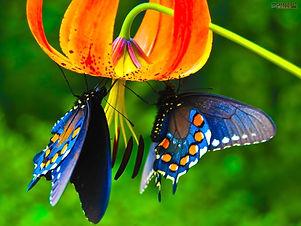 164404_butterfly.jpg