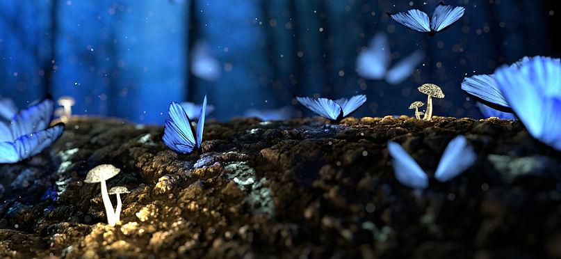 butterfly-2049567_edited.jpg