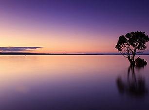 sunset-1373171_960_720purple_tree.jpg