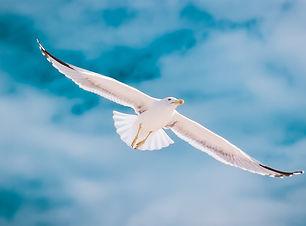 seagull-2444497_1920.jpg