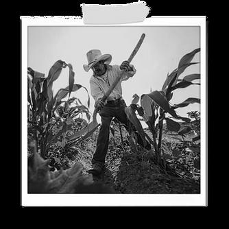 campesino feliz cosechando