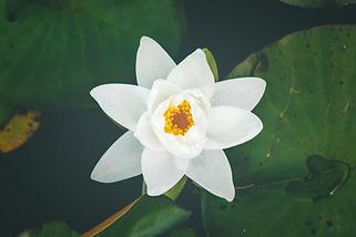 nature's chakra's-3.jpg