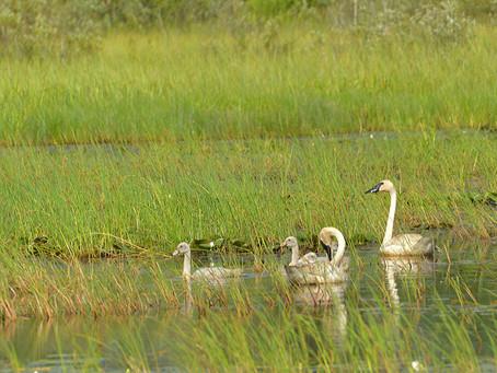 Lawmakers Rewrite their Rewritten Wetlands Rules