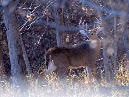 Old Fears, New Hype Fuel CWD News