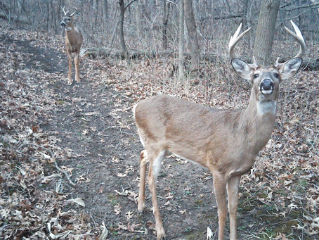 Wisconsin Governor's Gaffe an Opportunity to Lead CWD Fight