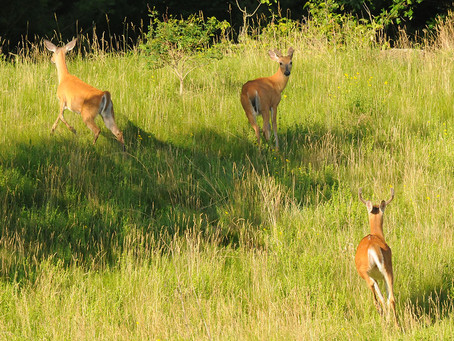 Past CWD Mistakes will be Tough to Overcome