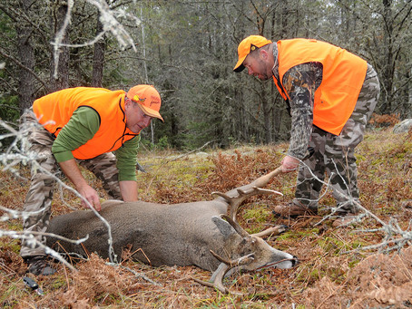Record Numbers Weigh in to Rout Deer Hunt Proposals