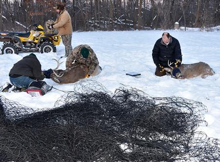 Research: CWD Still Bigger Deer Threat than Predators