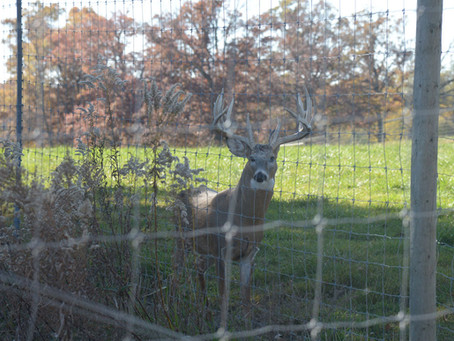 Lawmakers Tap Hunters' Fees to Fund Deer Farm Study