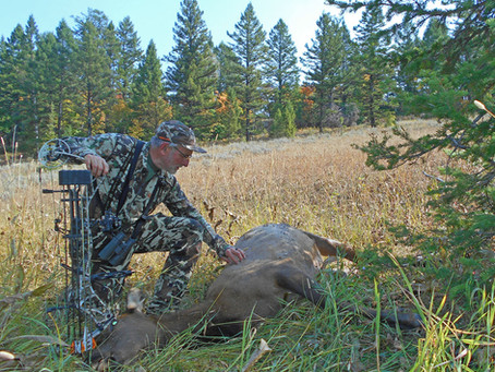 Late-Morning Patience Pays off with an Elk
