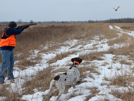 Should the DNR Extend Training Seasons for Hunting Dogs?