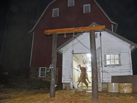 Late-Season Deer Hunt Reveals Rural Change