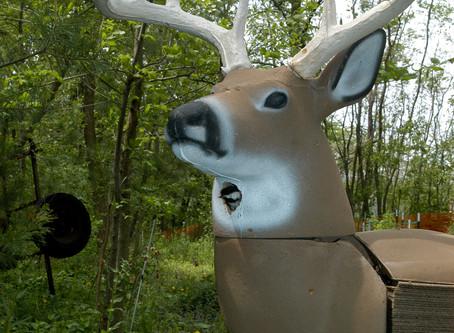 Chickadees Make Selves at Home in 3D Deer Targets